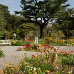 tulips perennial garden