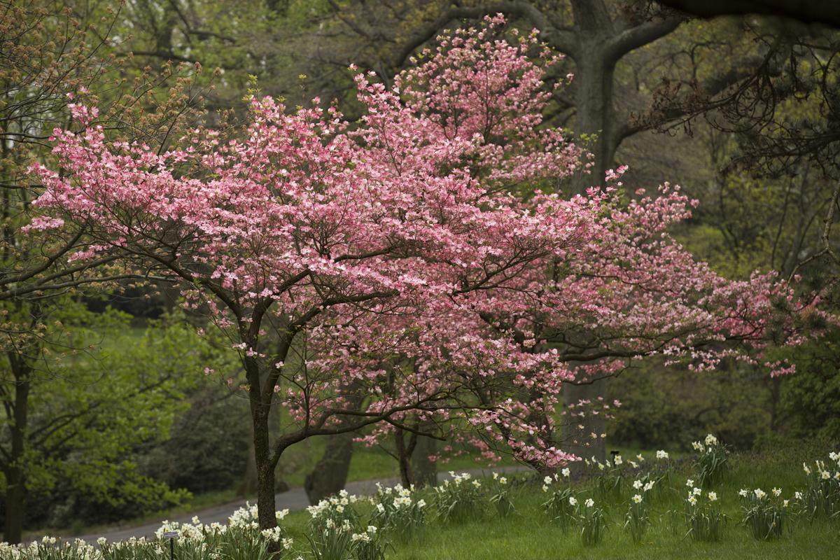 morning eye candy splash of pink plant talk. Black Bedroom Furniture Sets. Home Design Ideas