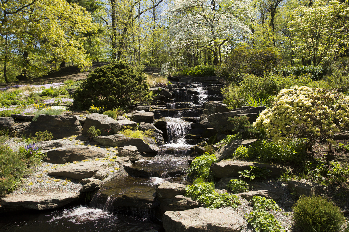 Morning eye candy inspiration s quarry nybg for Rock garden waterfall