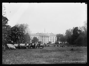 Sheep grazed the White House lawn during World War I.