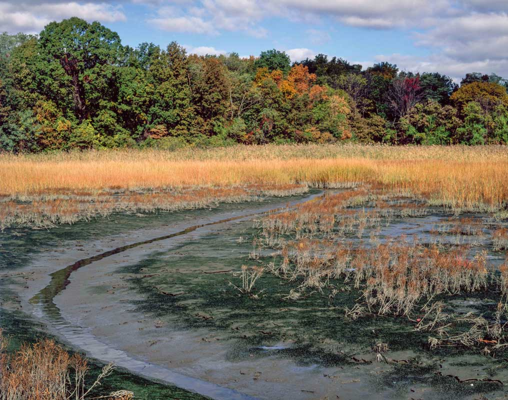 Figure 3: Salt marsh, Goose Creek Marsh, Pelham Bay Park, The Bronx – Photo by Mike Feller