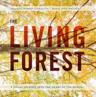 Photo of the cover of The Living Forest