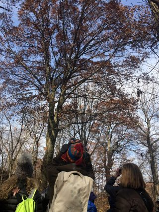 Bird-watching in the Thain Family Forest