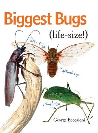 Biggest Bugs