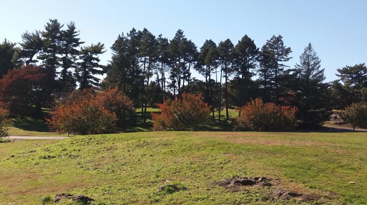 Photo of Douglas firs