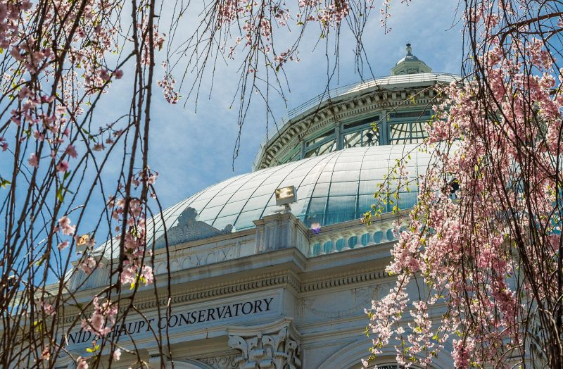 Photo of the Conservatory Dome