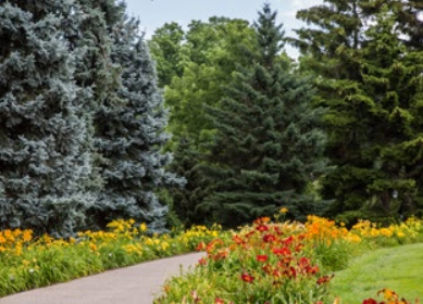 Photo of Daylily/Daffodil Walk