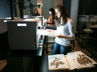 An NYBG employee digitizing specimens.