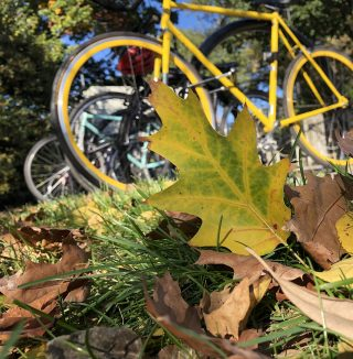 Photo of a bike in fall