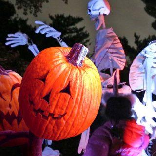 Photo of Spooky Pumpkin Nights
