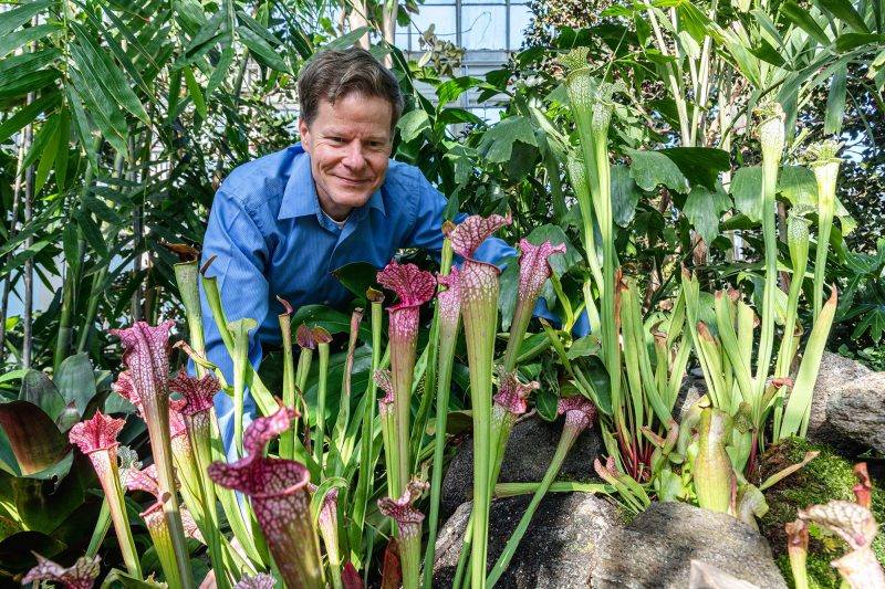 Photo of Robert Naczi among pitcher plants