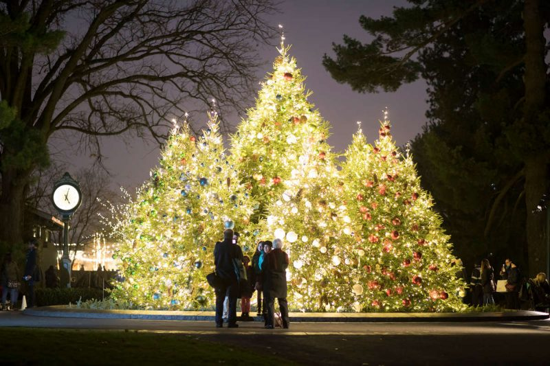 Photo of visitors standing before lit trees