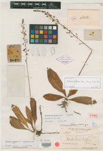 A Britton Specimen