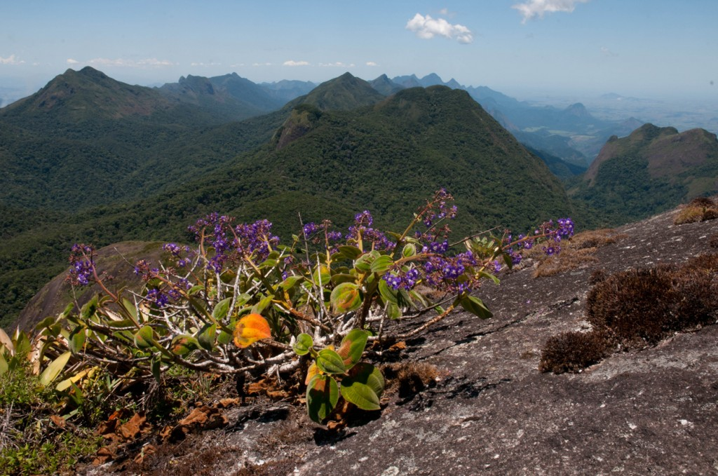 Granitic outcrops and cloud forest in the State of Rio de Janeiro. Mountain systems such as this harbor a great proportion of the endemic species in the Atlantic Forests.