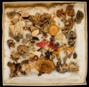 Eaton's Fungal Collection