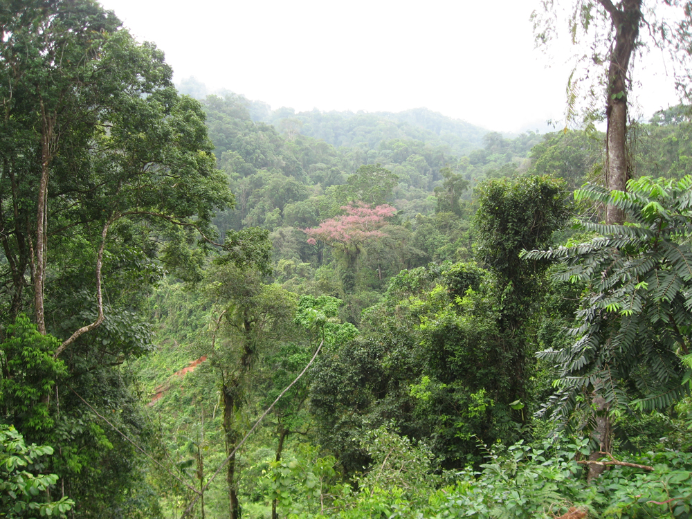 A Central American rain forest that is home to a rare plant species recently described by Dr. Daly