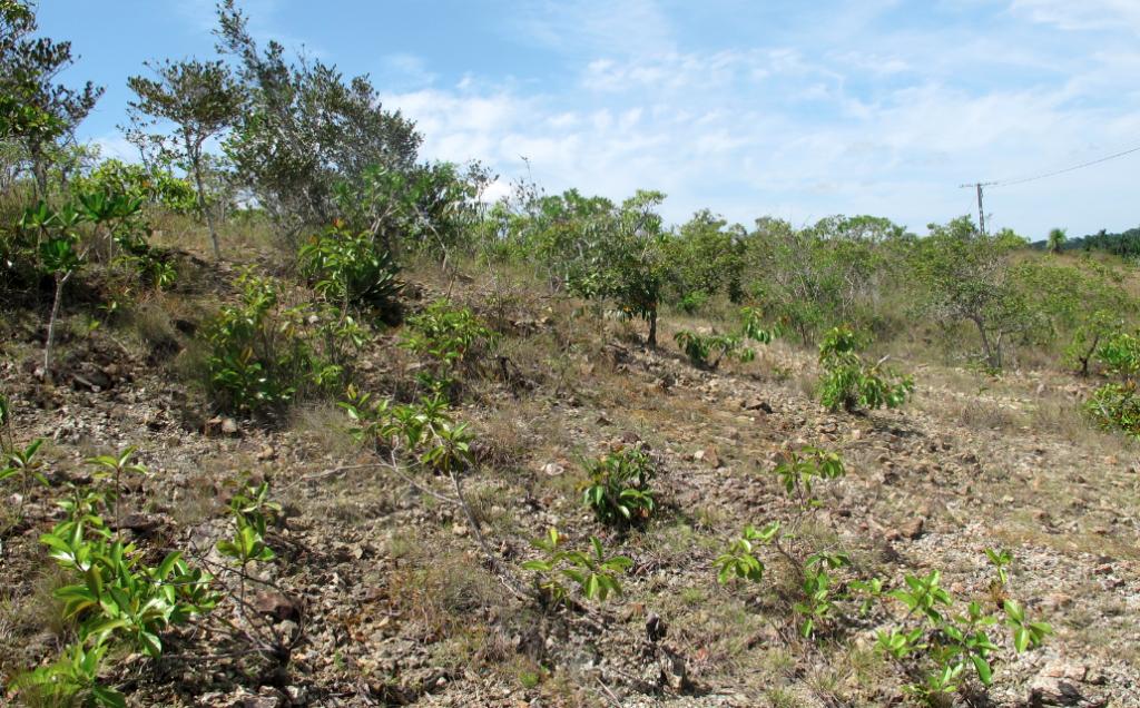 Serpentine savanna near Las Minas