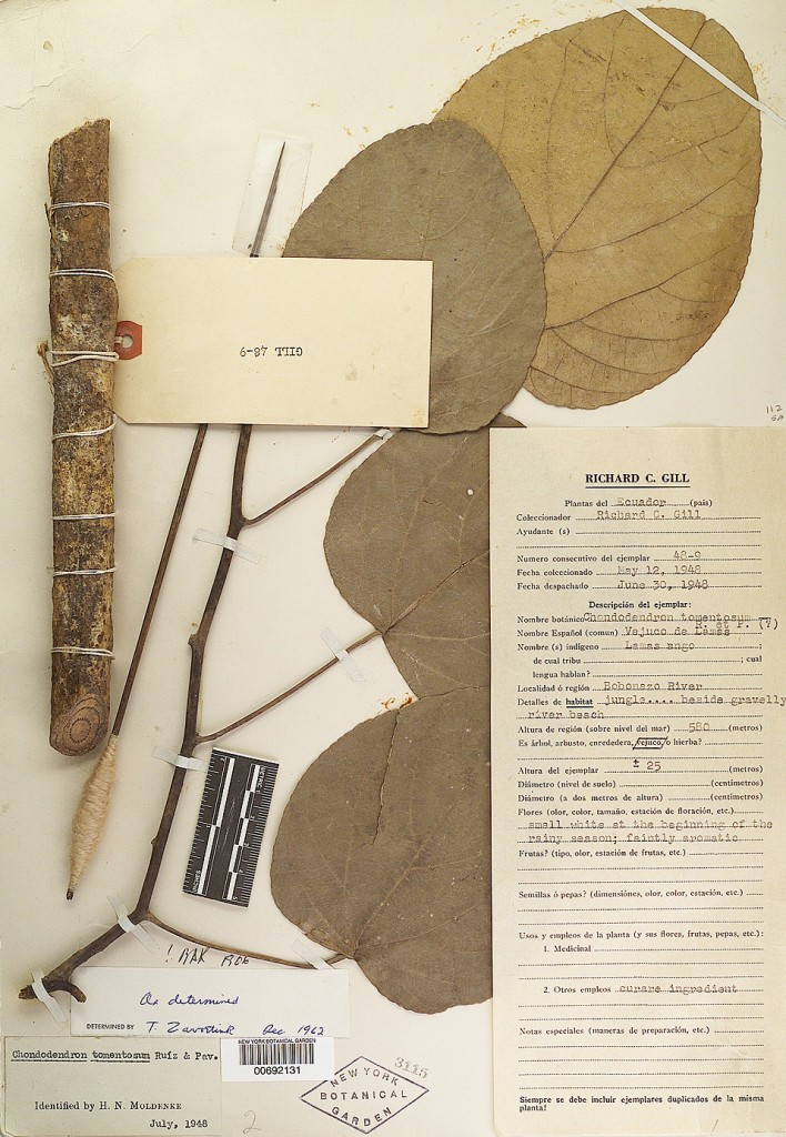 A curare specimen originally collected by Richard C. Gill