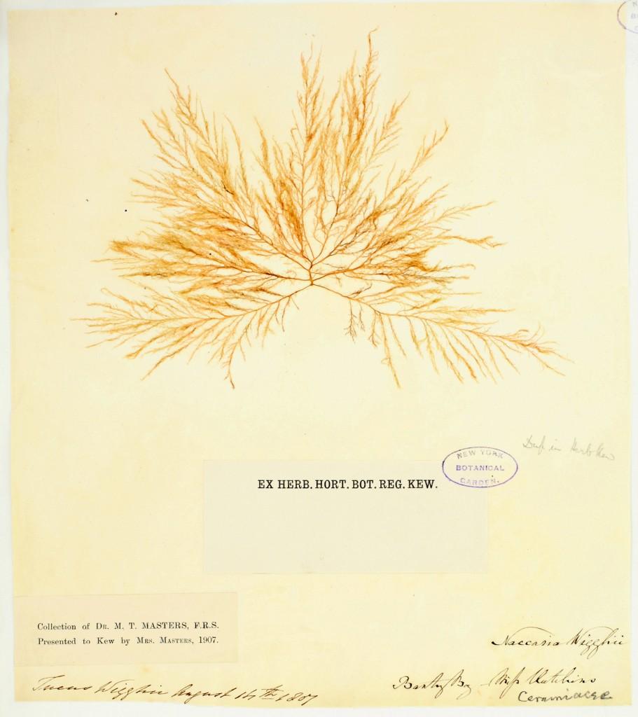 Hutchins Specimen