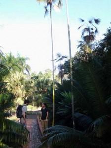 National Botanical Garden in Santo Domingo Jardin Botanico Nacional Dr. Rafael M. Moscoso