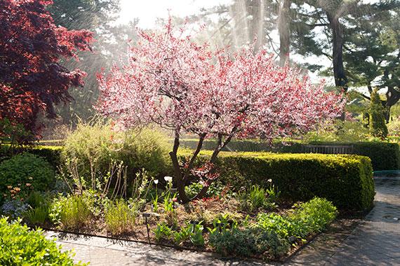Perennial Garden New York Botanical Garden