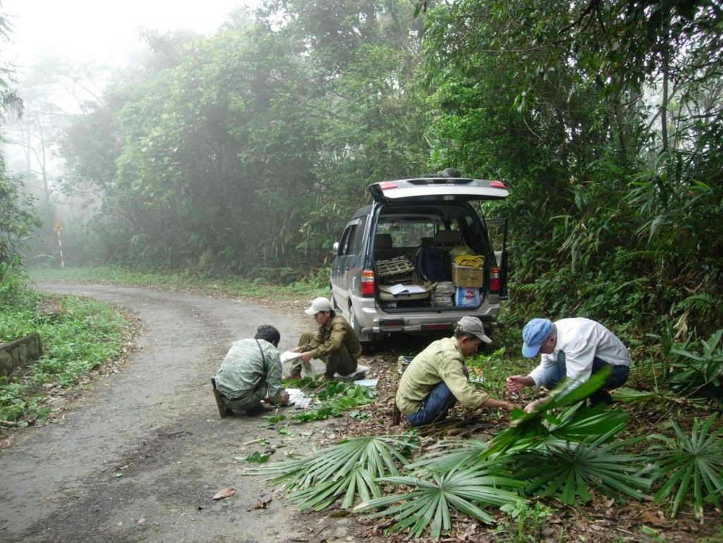 Dr. Henderson (right) and colleagues collecting palm specimens