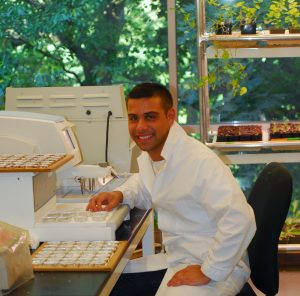Lehman College Master's degree graduate Dario Cavaliere studying anatomy of the sesame family in NYBG's Plant Research Laboratory.