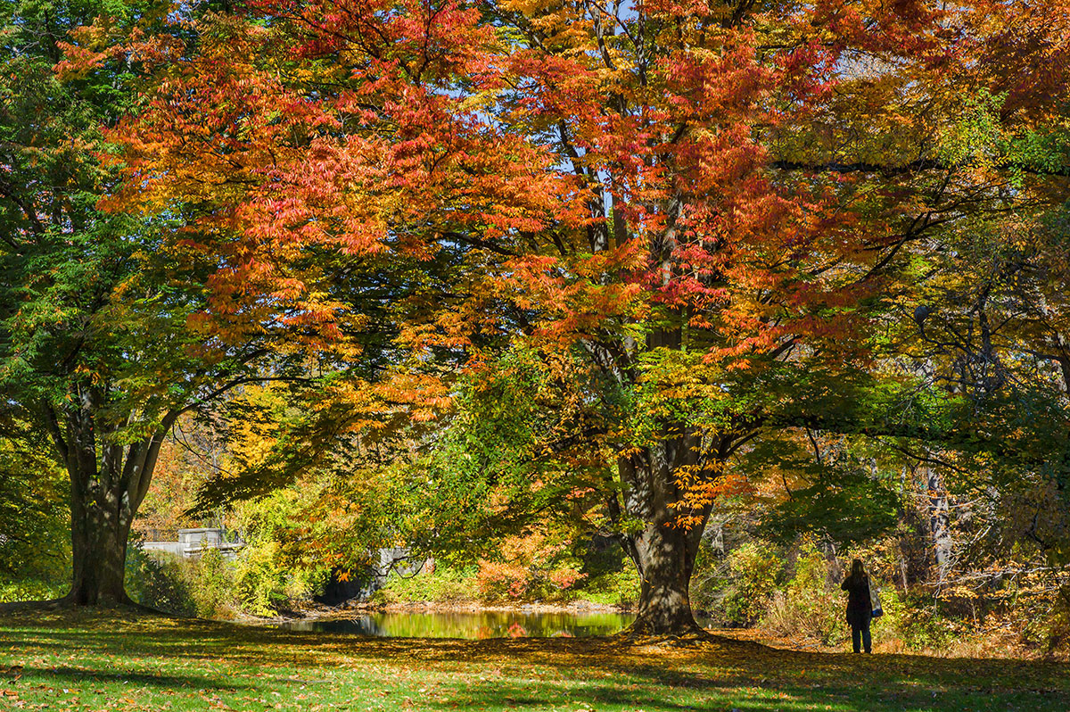NYBG fall forest foliage
