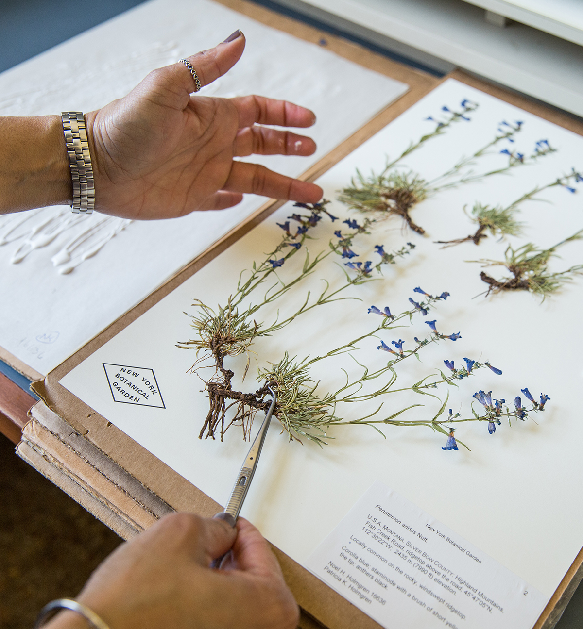 New York Botanical Garden Herbarium Virtual Garden Ftempo