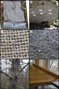 Lichen transplant methods use a variety of artificial surfaces