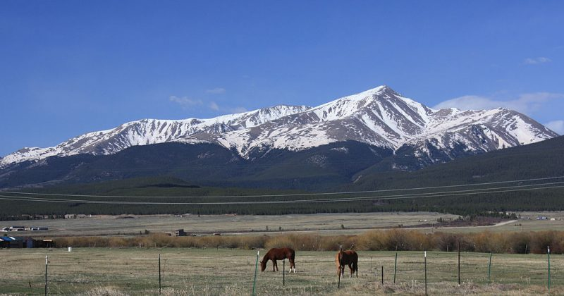Mt Elbert and its visible tree line.