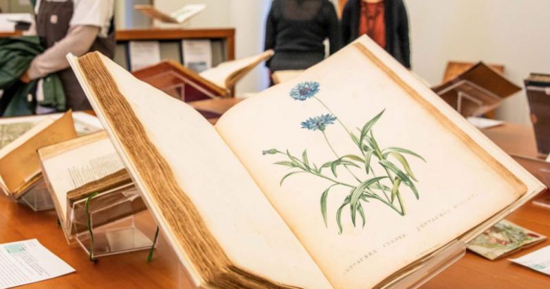 Photo of a botanical illustration