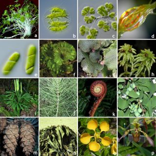Mosaic of diverse plant species