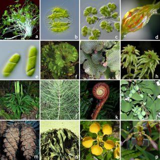 Mosaic of diverse plant species