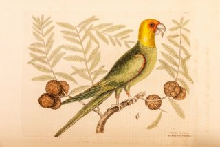 An illustration of a parrot.