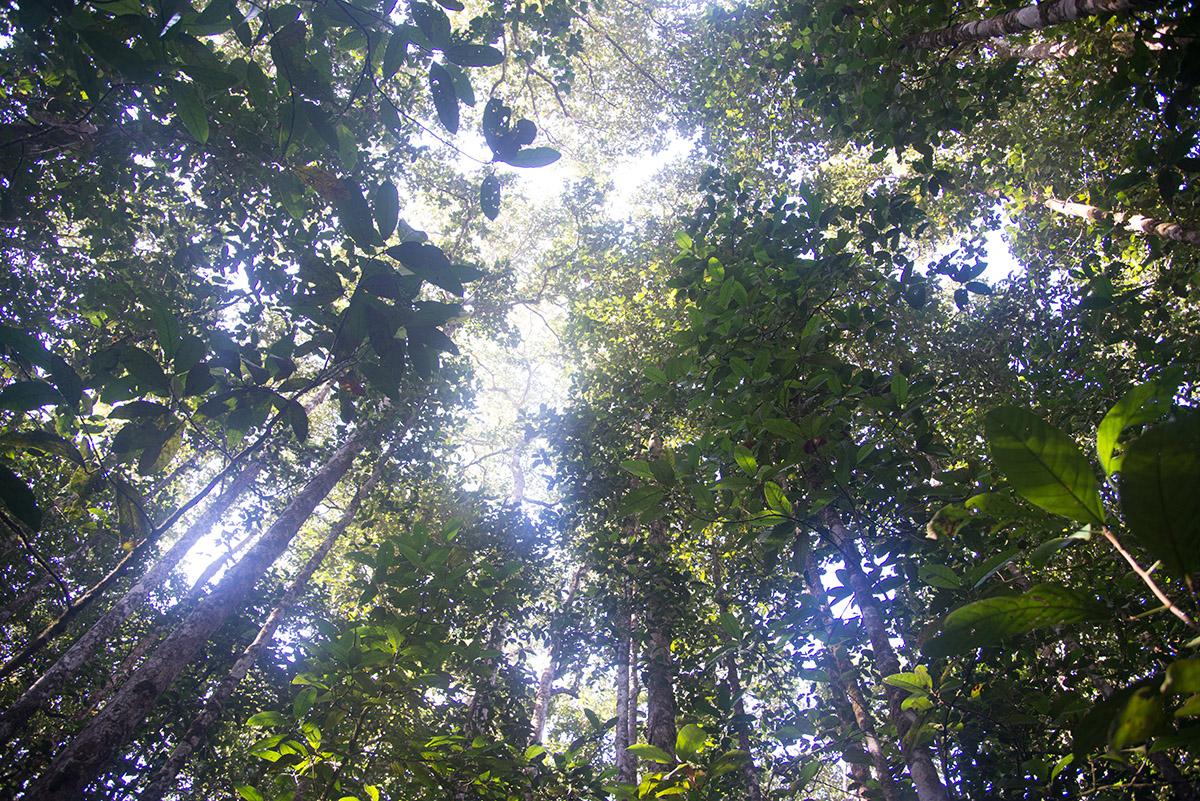 Guiana forest