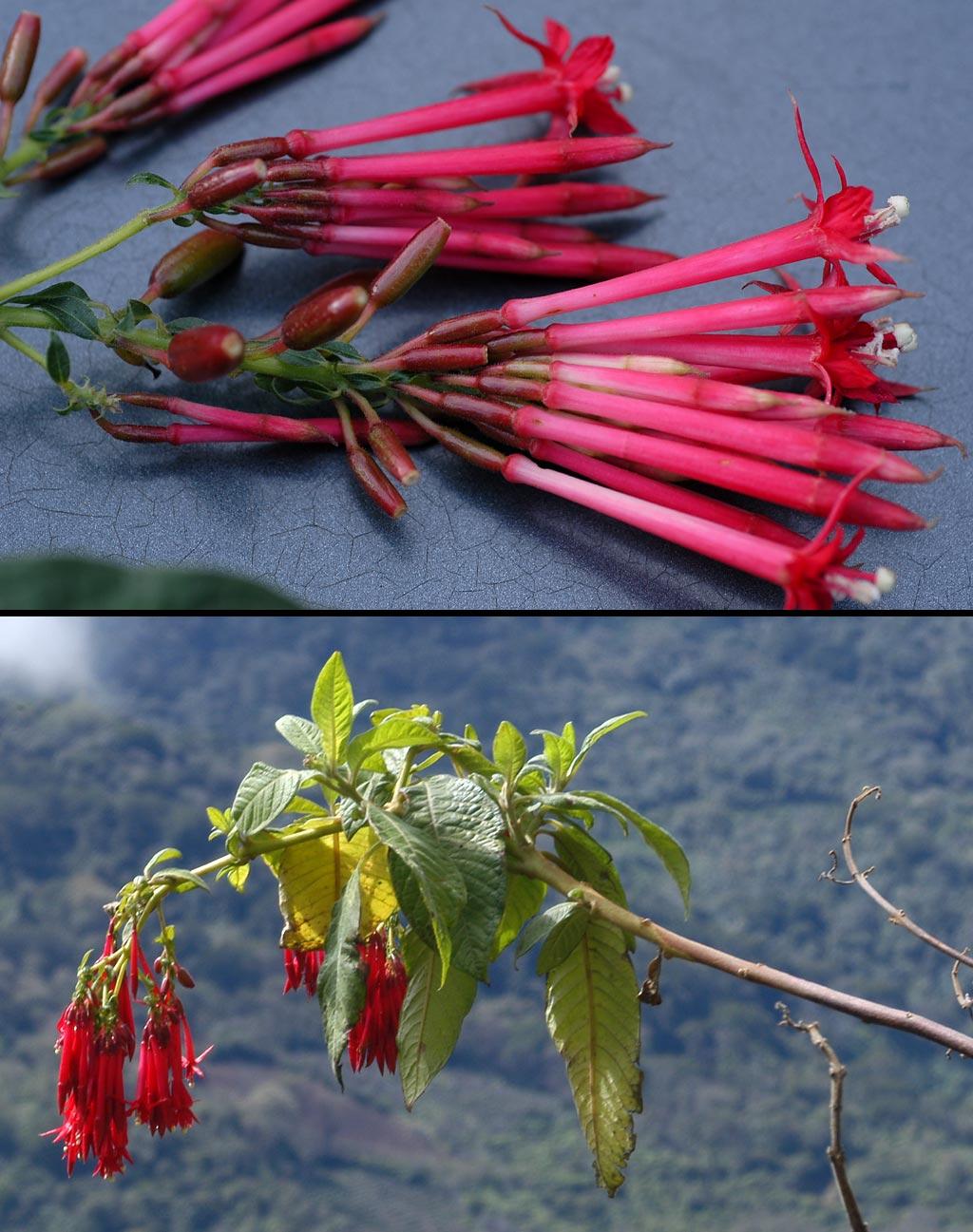 flora of parque nacional amboro