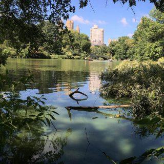 Britton gallery talks 2017 new york botanical garden - New york botanical garden parking ...