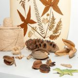 A collection of herbarium samples