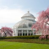 The Conservatory with two blooming cherry trees nearby.