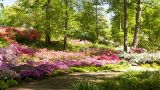 Photo of Azalea Garden