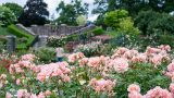 Photo of the Rose Garden