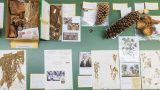 Photo of herbarium specimens