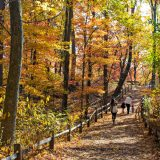 The Thain Family Forest in fall.