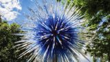Photo of Dale Chihuly's Sapphire Star