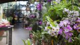 Photo of orchids in the NYBG Shop
