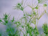 close up of Algae