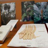 A herbarium specimen in an exhibition.