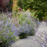 Photo of the Perennial Garden