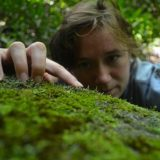 A scientist inspecting moss on a rock.